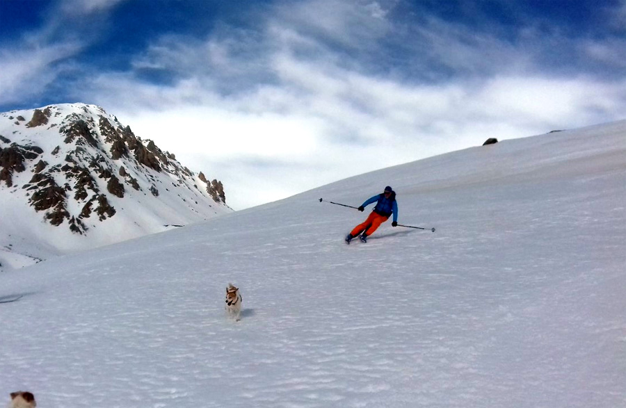 skiing with dogs