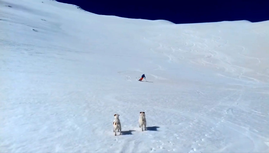 Rando Chiens ski touring with dogs